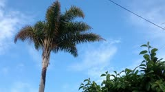 Tropical Palm Tree Sky - stock footage
