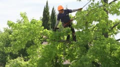 Tree trimming Stock Footage