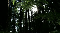 Forest Floor Fern, Glimmering Sun, Dolly Stock Footage