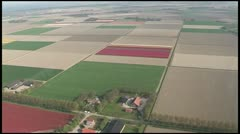 Helicopter footage flower fields Stock Footage