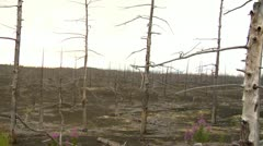 dead forest 5 - stock footage