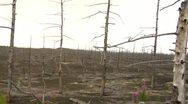 Dead forest 5 Stock Footage