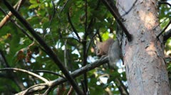 Squirell eat Stock Footage