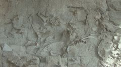 P01863 Pan of Dinosaur Fossils in Rock at Dinosaur National Monument Stock Footage