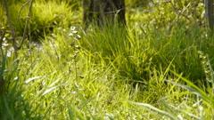 Beautiful wild flowers in grass. - stock footage