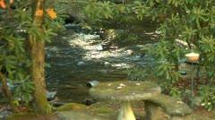 Summer Stream (1080-24FPS).mp4 - stock footage