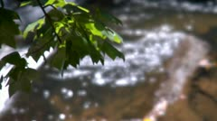 Tree Branch Rack Focus to Stream (1080-24FPS).mp4 - stock footage