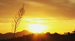 Desert Sundown with Fernlike Feather Plant Silhouette Stock Footage