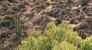 Stock Video Footage of Desert Canyon Spring Cottonwood Saguaro SloMo