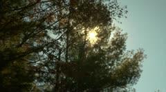 Sun shining through trees (1080-24FPS).mp4 - stock footage