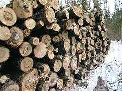 Stack tree trunk log Stock Footage