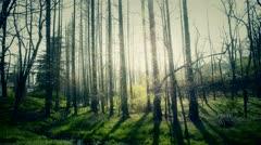 Sunlight woods.Weeds by river,dense cedar dawn-redwood forest,woods,Jungle,shru Stock Footage