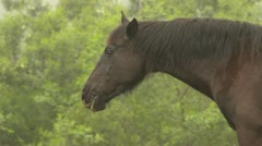 Horse close up - stock footage