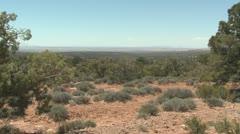 P01907 Desert Shrubland in Utah Stock Footage