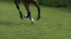 Horse race jump close up 03 Stock Footage