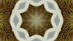Beautiful magnolia bloom Kaleidoscope.pattern,four consecutive,illustration,car Stock Footage