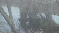 Wet Swamp - stock footage