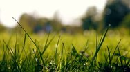 Green summer park Stock Footage