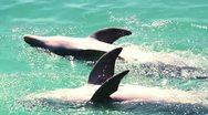 Dolphins marine park Stock Footage