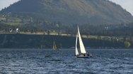 Sailboats Stock Footage