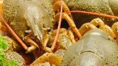 Crayfish and beer Stock Footage