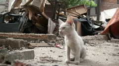 Young white kitten (cat) in the middle of a demolished quarter in China Stock Footage