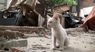 Stock Video Footage of Young white kitten (cat) in the middle of a demolished quarter in China