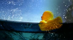 Plastic duckie03 2yellow plastic duck floating in a swimming pool Stock Footage