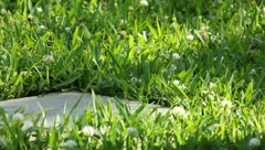 Grass with paving stone - stock footage