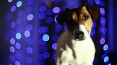 Blue Background and dog Stock Footage