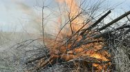 Burning twigs and debris on fire Stock Footage