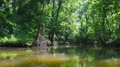 Stock Video Footage of Backwater Creek