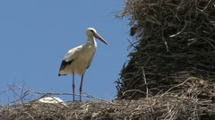 Spain stork on nest 3 ruffles feathers Stock Footage