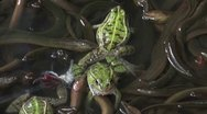 Stock Video Footage of Catching frogs between eels at a Chinese market