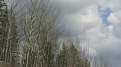 Storm Clouds Move Over Windy Early Spring Forest Stock Footage