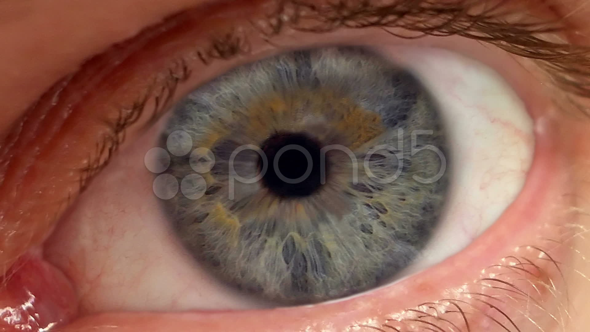 Zoom Into Pupil From E...