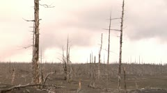 dead forest 8 - stock footage