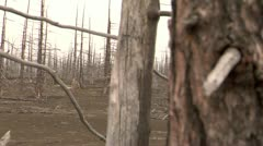 dead forest 9 - stock footage