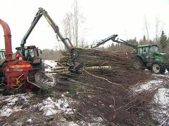 Forest management biofuel Stock Footage
