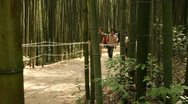 Stock Video Footage of People walking through Bamboo forest