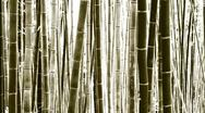 Stock Video Footage of Pan-right shot of beautiful bamboo forest