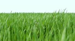 Wind fluttering green grass Stock Footage