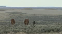 P01997 Wild Horses in the Red Desert of Wyoming on Bureau of Land Management Stock Footage