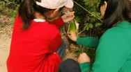 Stock Video Footage of Mother and daughter looking at bamboo in park