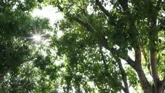 Tree leaves in the wind and good weather all the movements. Stock Footage