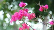A bouquet of red flowers in the garden. Stock Footage