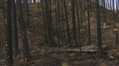 Glidecam Nightmare Burnt Forest Fire Walk Stock Footage
