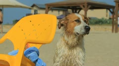 Dog on the beach Stock Footage