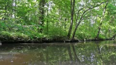 Creek Bank Glide Stock Footage