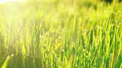 Close-up video of beautiful green grass with rain drops Stock Footage